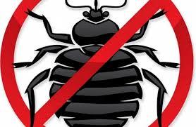 scarafaggi rimedi